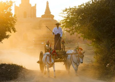 Oxes and cart driven through the dust near an ancient temple at sunset in Bagan, Myanmar (Burma)