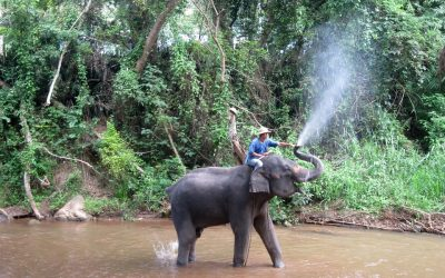 Lampang Mahout Training & Homestay