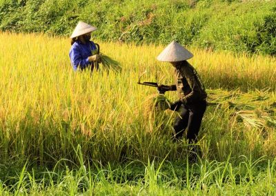 rice-asi-vietnam-travel asia