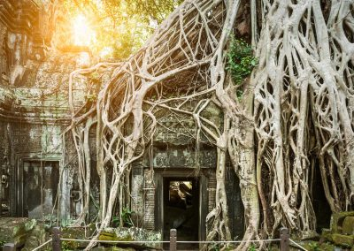 Ta Prohm-Temple-AngkorWat-Cambodia-Adventure -Asia-Travel