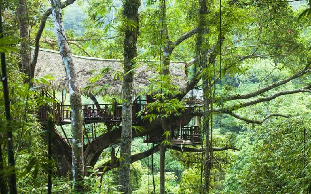 Tree-top Living in Chiang Mai – 3 Days/2 Nights