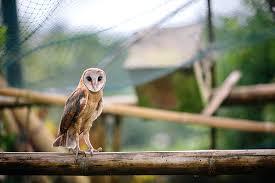 Bird aat