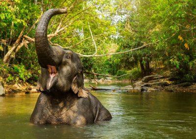 Elephant-Sanctuaries-Kata-Rocks-1