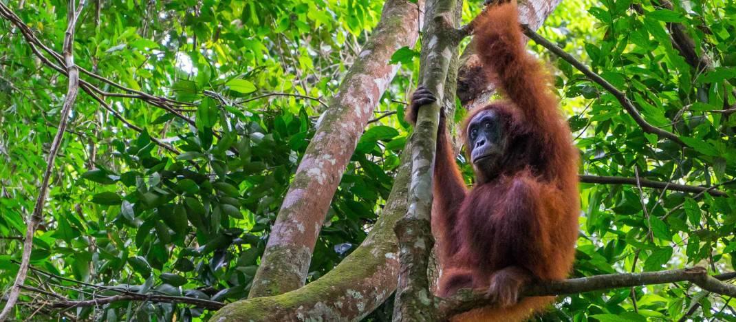 Hidden Thailand – 14 Day Eco-Tour of Northern Thailand